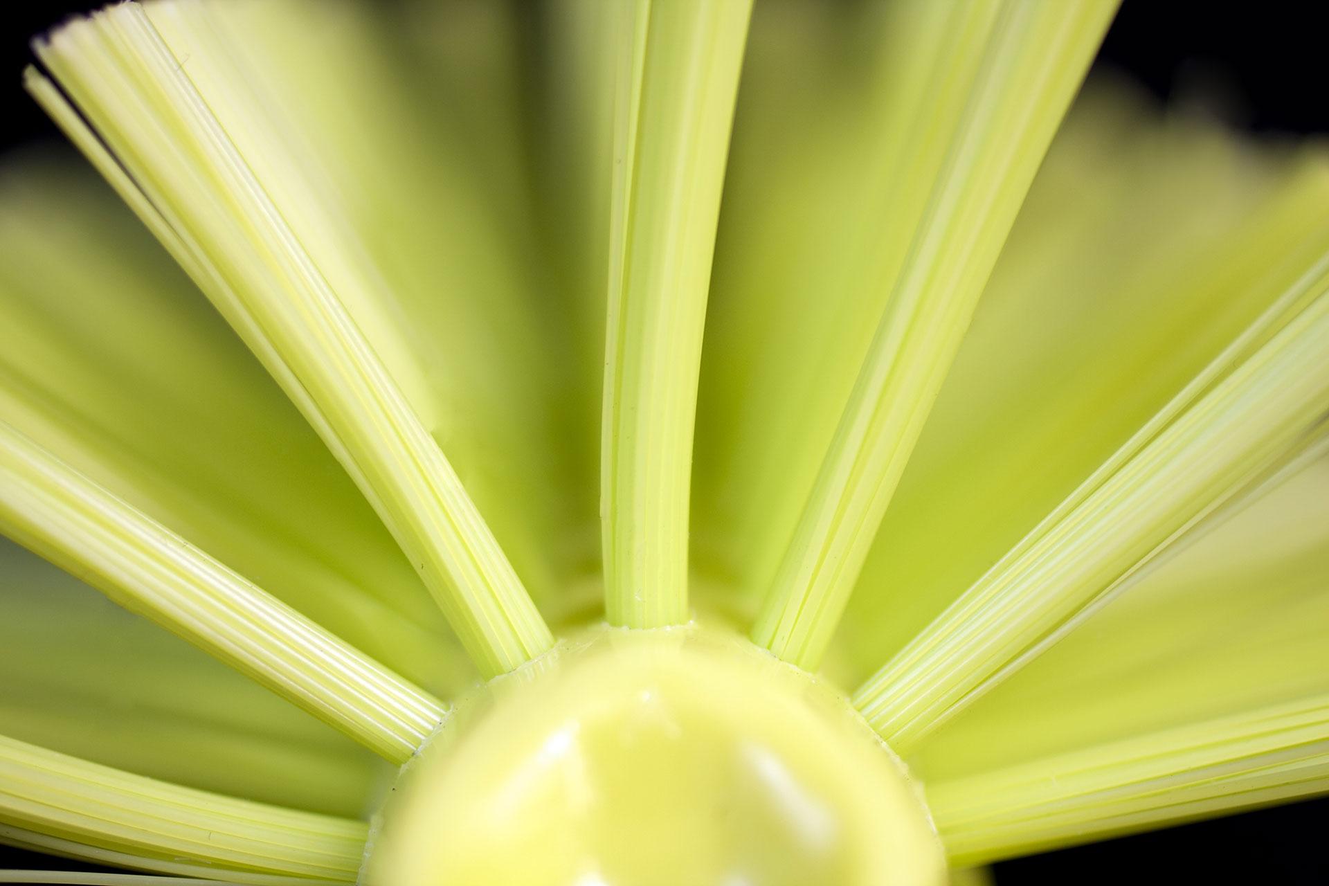 Gul-diskborste solfjäder